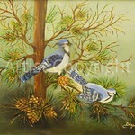 Blue Jay in Pines Dina Jacobs compressed